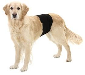 Hanhund kisskydd M