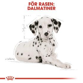 Royal Canin Dalmatiner Puppy 12kg