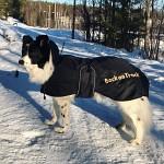 Back On Track Hundtäcke Standard fodrat  21-40cm