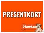 Hund.se Presentkort 100kr