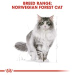 Royal Canin Norwegian Forest Cat Adult 10kg
