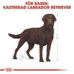 Royal Canin Labrador Retriever Sterilised 12kg