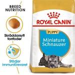 Royal Canin Miniature Schnauzer Puppy 1,5kg