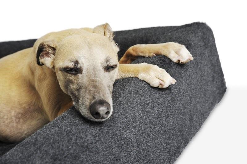 BiaBed Pilé hundbädd överdrag Nr 2
