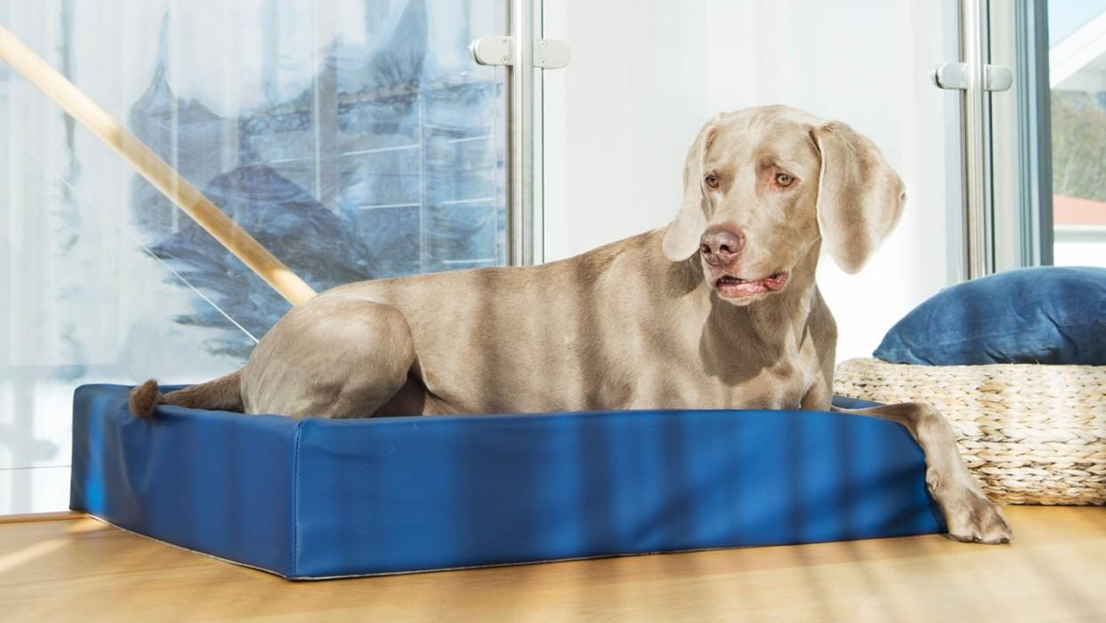 BiaBed Hundbädd Nr 3, 60x70cm