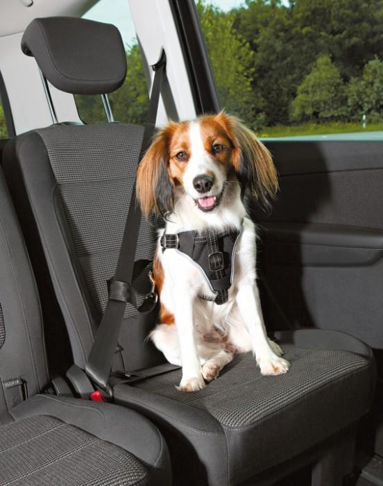 Trixie Bilsele Dog Protect S/M
