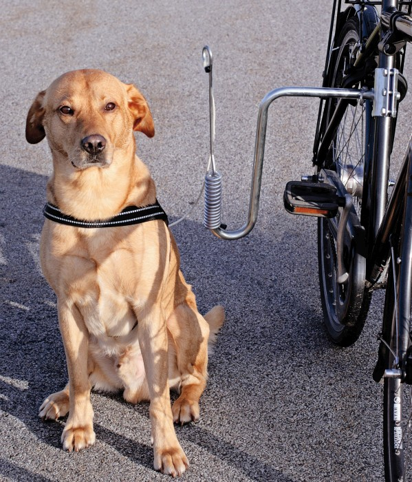 Cykelfäste till hund
