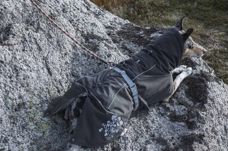 Hurtta Extreme Warmer, Björnbär