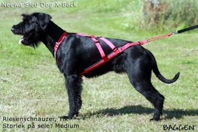 Neewa Sled Dog X-Back, Röd