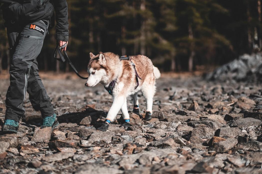 Non-Stop Protector Hundsocka 4-Pack