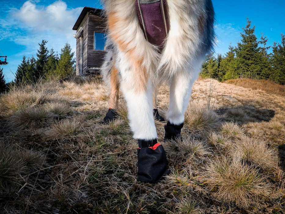 Non-Stop Solid Hundsocka 4-pack