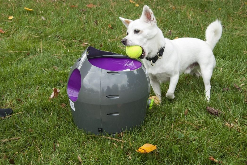 PetSafe Bollkastare