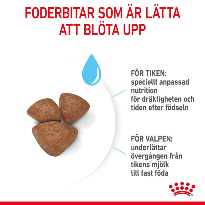 Royal Canin Mini Starter 8,5kg