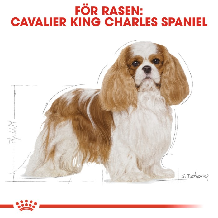 Royal Canin Cavalier King Charles Adult 7,5kg