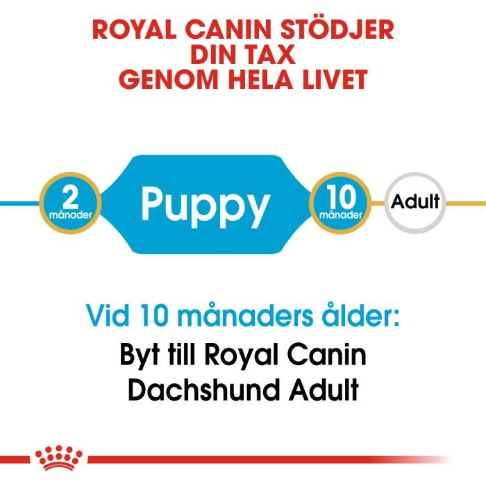 Royal Canin Dachshund Tax Valp 1,5kg