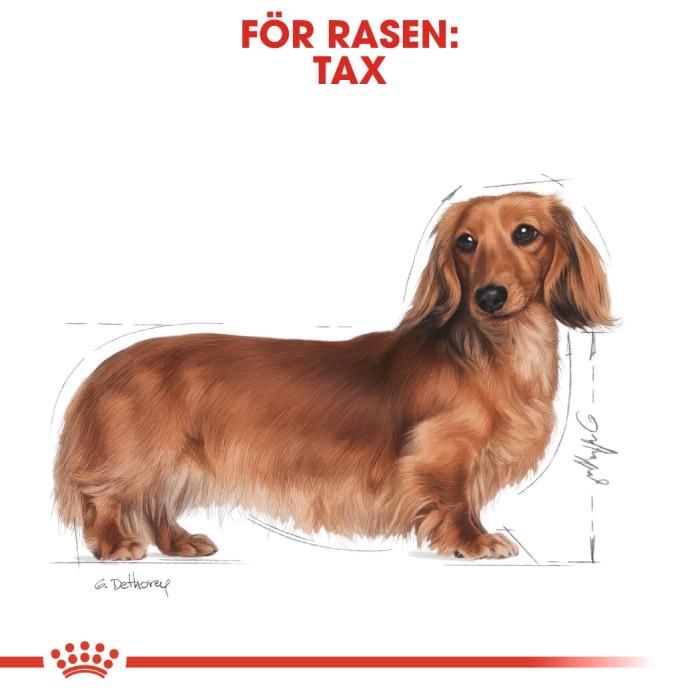 Royal Canin Wet Dachshund 12 x 85gr